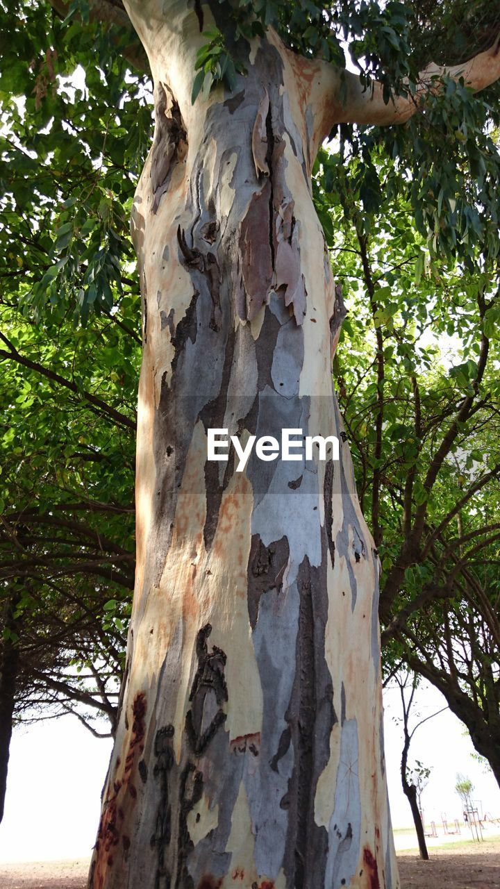 tree, tree trunk, day, low angle view, nature, branch, growth, outdoors, no people, forest, bark, close-up, beauty in nature