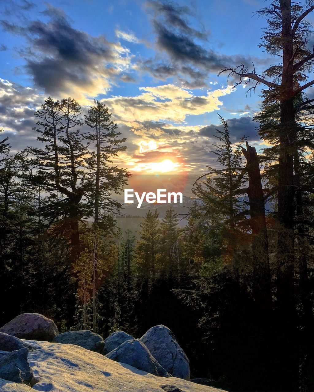 Scenic View Of Forest Against Cloudy Sky During Sunset