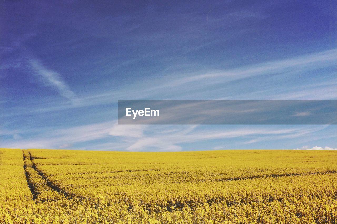 Idyllic shot of field against sky
