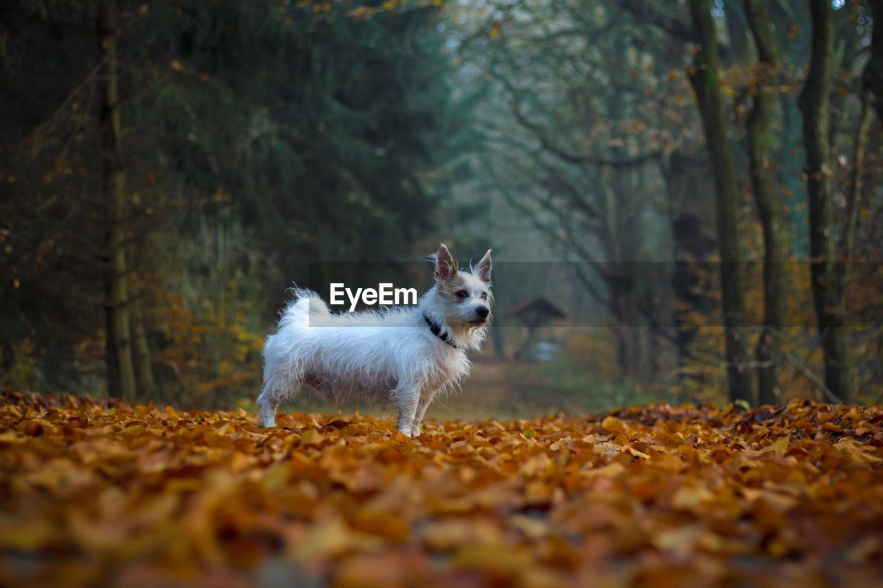 Portrait of dog in autumn forest