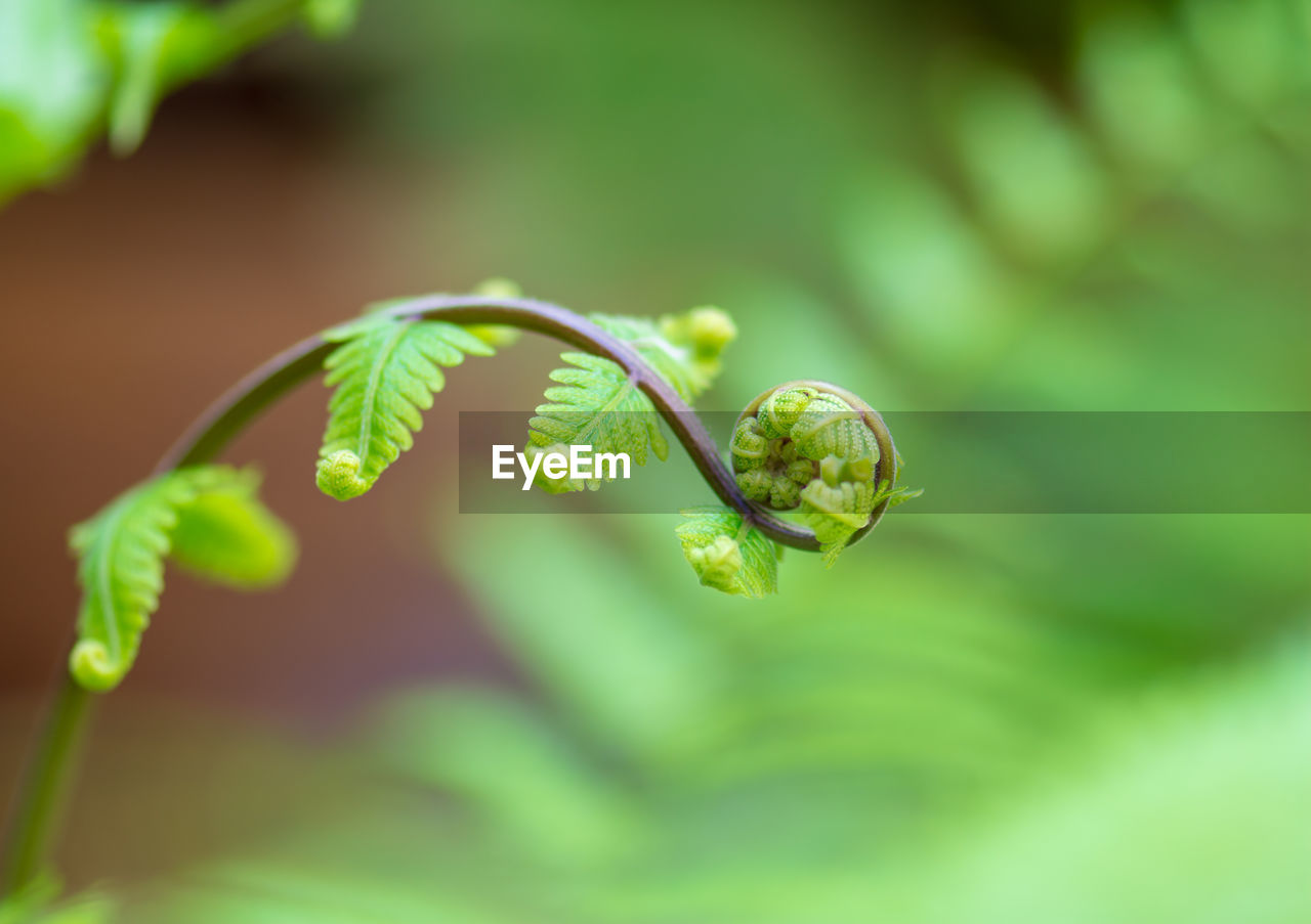 plant, green color, growth, close-up, plant part, beauty in nature, leaf, vulnerability, nature, focus on foreground, fragility, selective focus, no people, day, freshness, outdoors, plant stem, tendril, tranquility, insect
