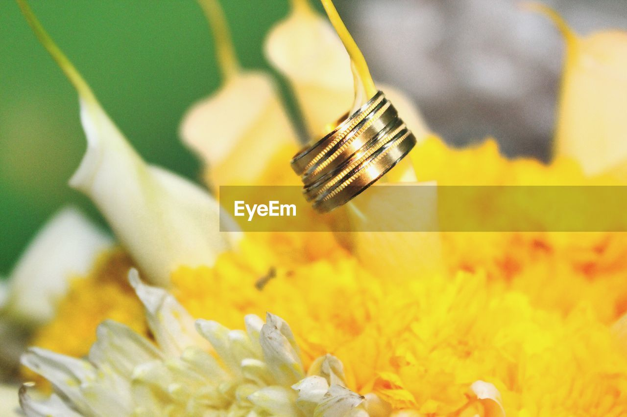 flower, yellow, close-up, no people, indoors, fragility, flower head, day