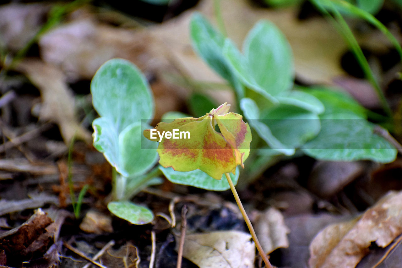 plant part, leaf, plant, growth, close-up, nature, green color, day, no people, beauty in nature, field, land, focus on foreground, selective focus, dry, vulnerability, fragility, freshness, high angle view, outdoors, leaves, change
