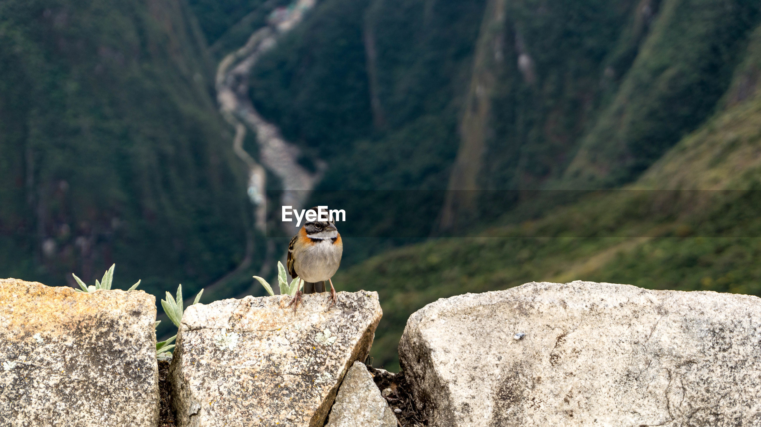 Bird perching on rock against mountains