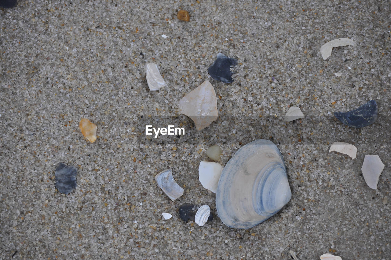 sand, beach, garbage, outdoors, nature, seashell, day, no people, close-up