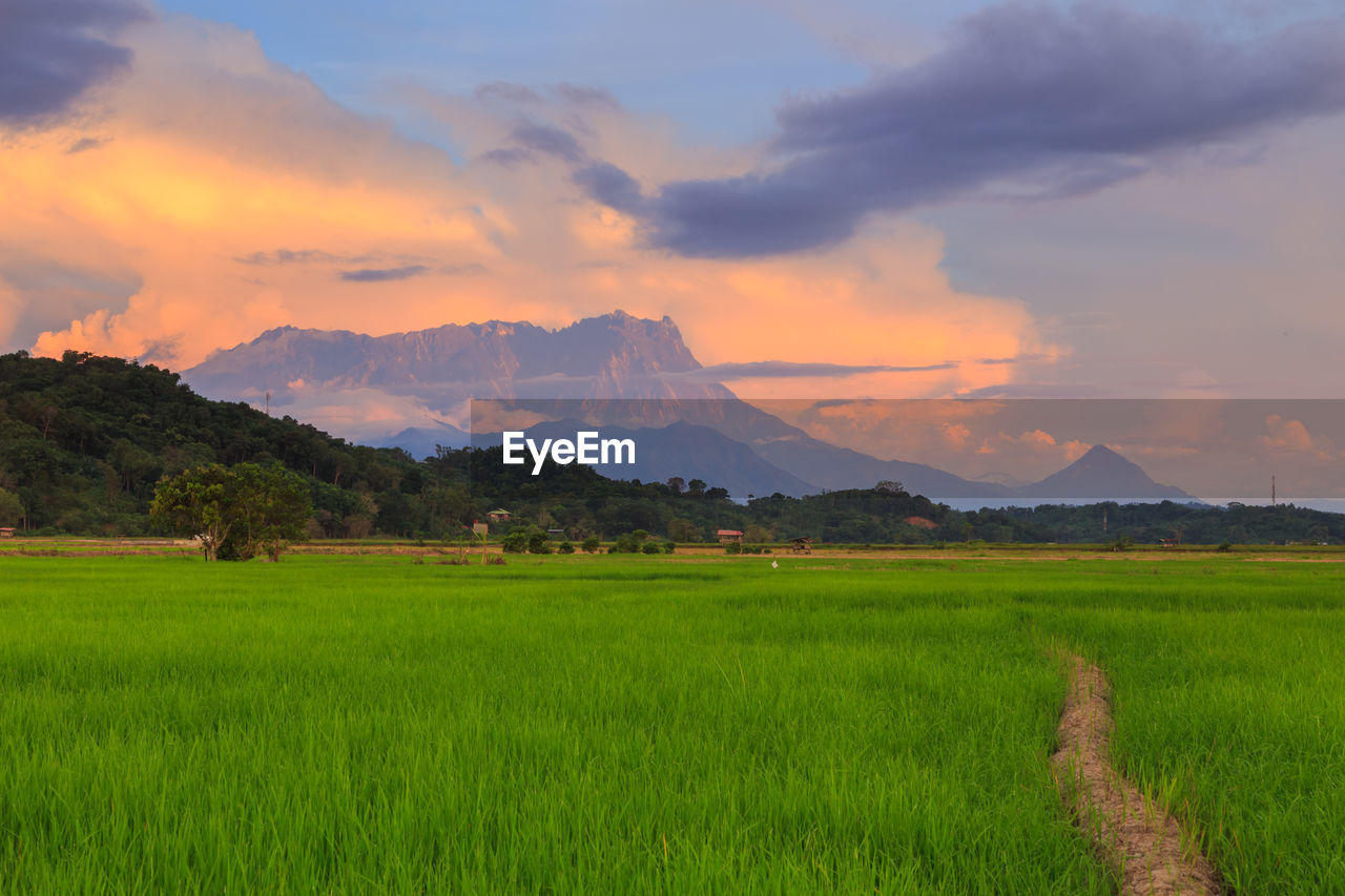 scenics - nature, landscape, environment, mountain, sky, beauty in nature, tranquil scene, green color, field, tranquility, plant, grass, land, cloud - sky, growth, nature, sunset, no people, agriculture, mountain range