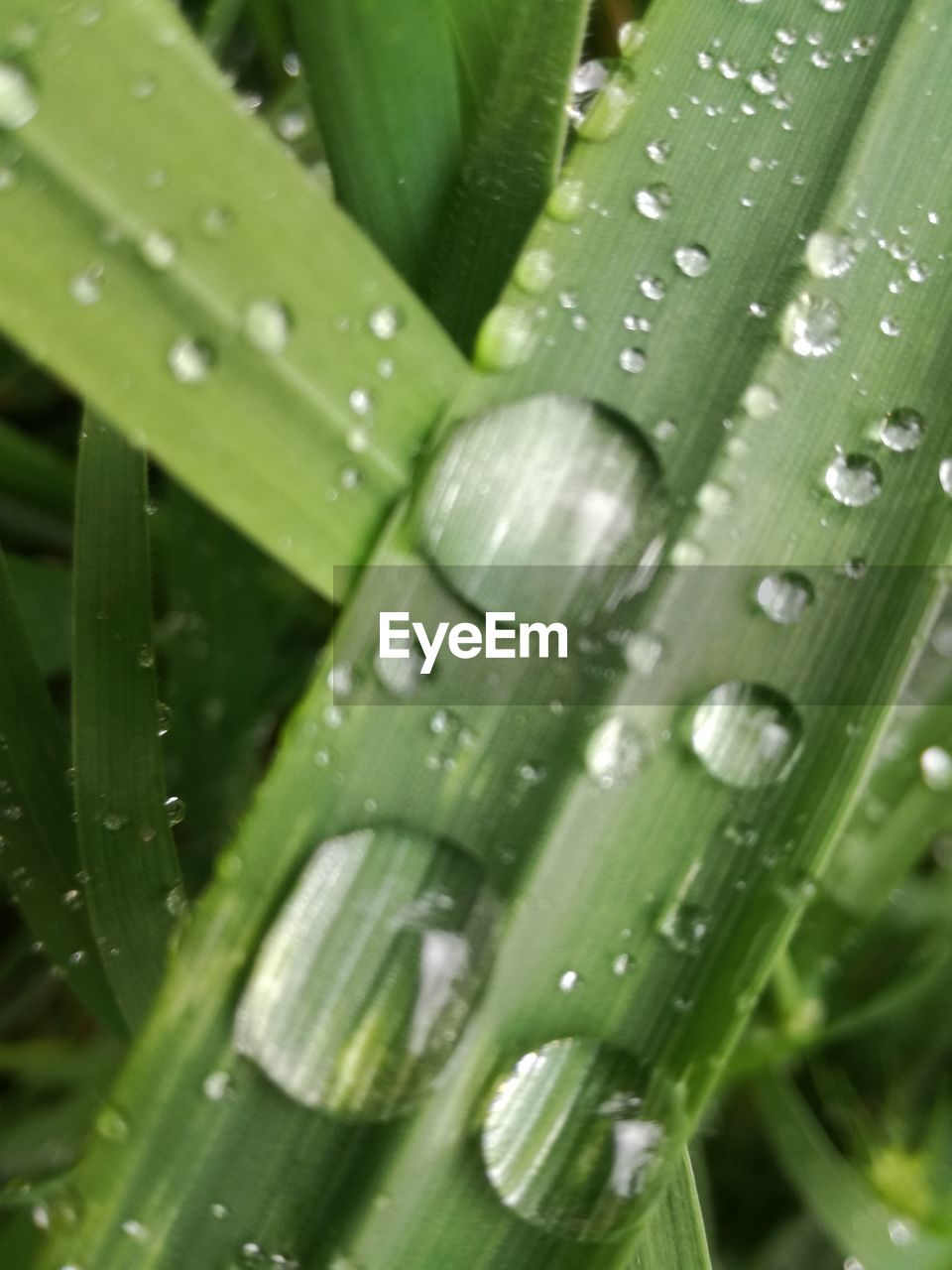 green color, drop, close-up, nature, leaf, wet, plant, growth, water, aloe vera plant, aloe, no people, freshness, day, backgrounds, outdoors, raindrop, banana leaf, full frame, beauty in nature, healthcare and medicine, grass, fragility