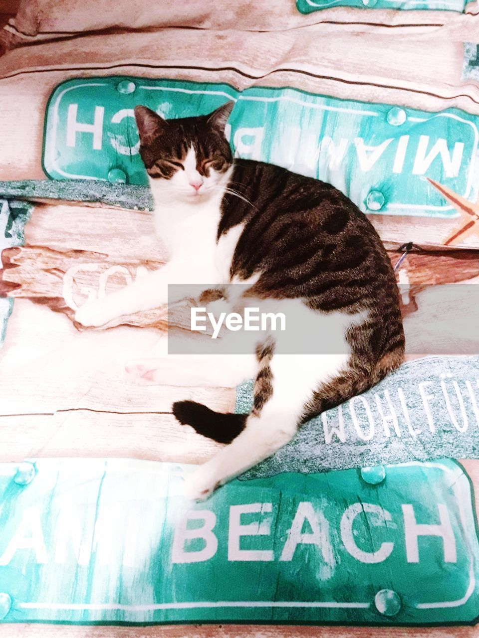 cat, feline, domestic cat, mammal, pets, domestic animals, domestic, one animal, vertebrate, sleeping, people, relaxation, real people, text, lying down, resting, day, whisker