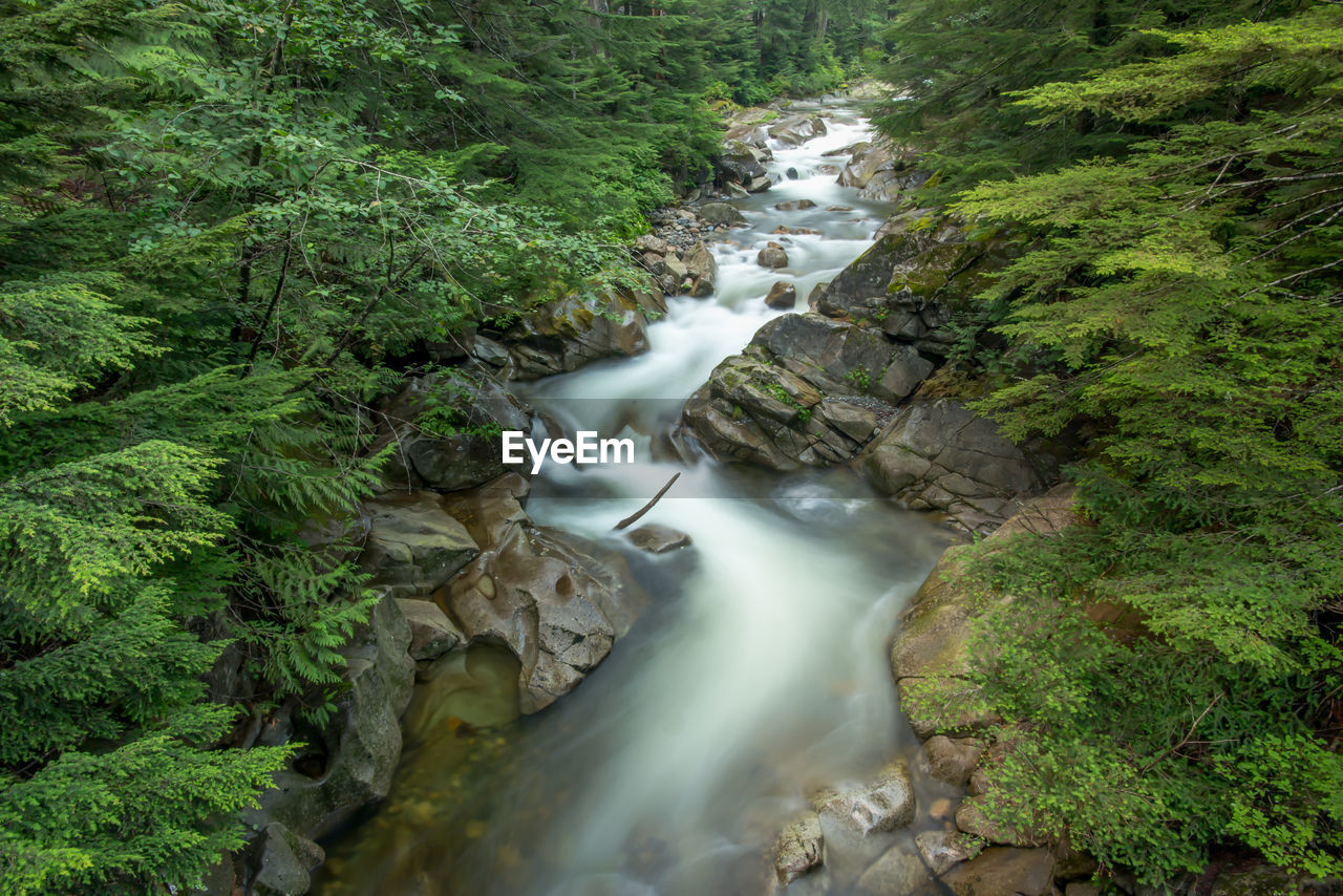 tree, forest, plant, beauty in nature, flowing water, motion, scenics - nature, waterfall, long exposure, land, blurred motion, nature, environment, rock, no people, water, foliage, green color, lush foliage, flowing, outdoors, rainforest, stream - flowing water, power in nature