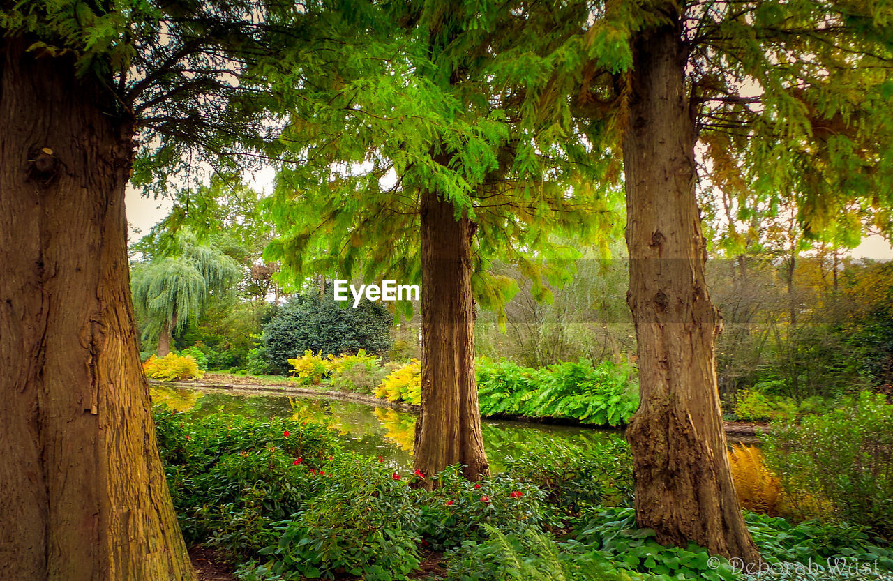 tree, tree trunk, green color, nature, no people, forest, outdoors, tranquil scene, growth, plant, grass, summer, scenics, beauty in nature, day, flower