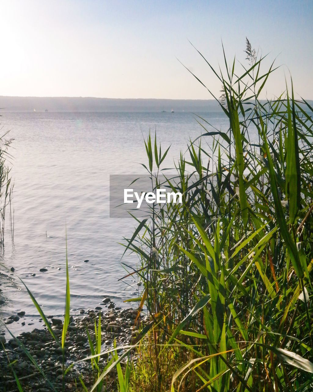 water, sea, nature, growth, horizon over water, beauty in nature, tranquility, plant, tranquil scene, scenics, outdoors, grass, no people, sky, day, clear sky, foreground, close-up