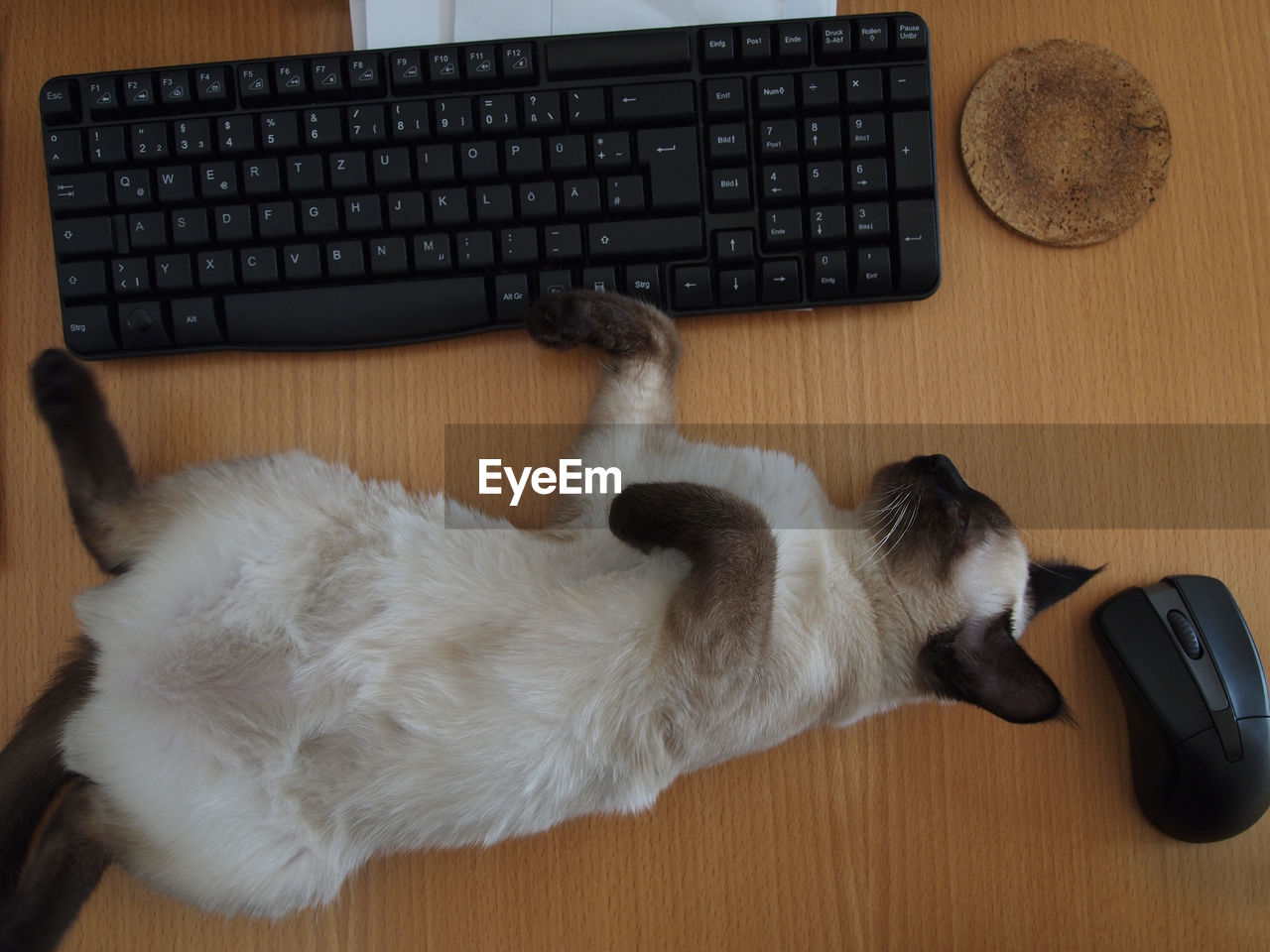Close-Up Of Cat Lying By Keyboard On Table