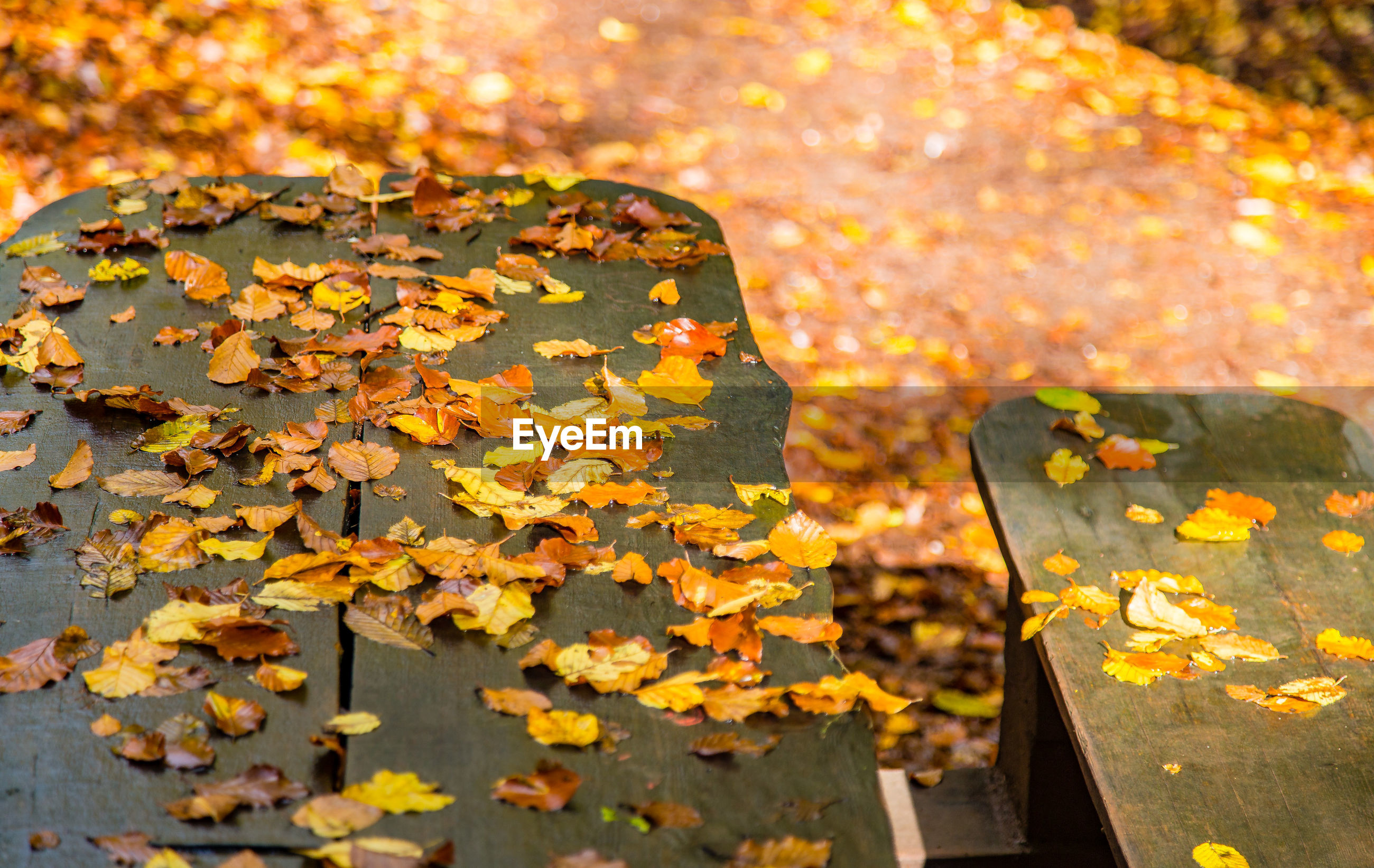 Autumnal leaves on cropped bench