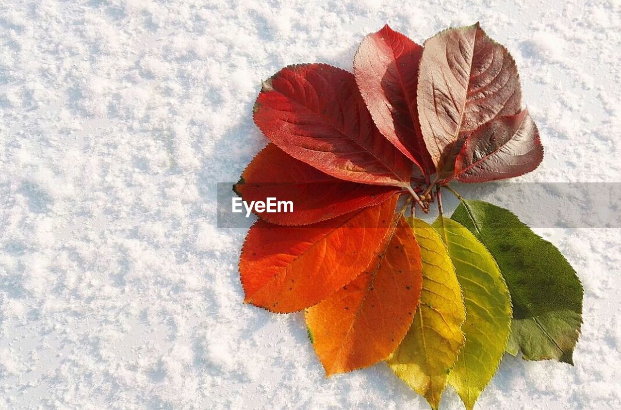 nature, beauty in nature, winter, cold temperature, snow, weather, day, petal, flower, outdoors, leaf, no people, fragility, red, close-up, freshness, flower head