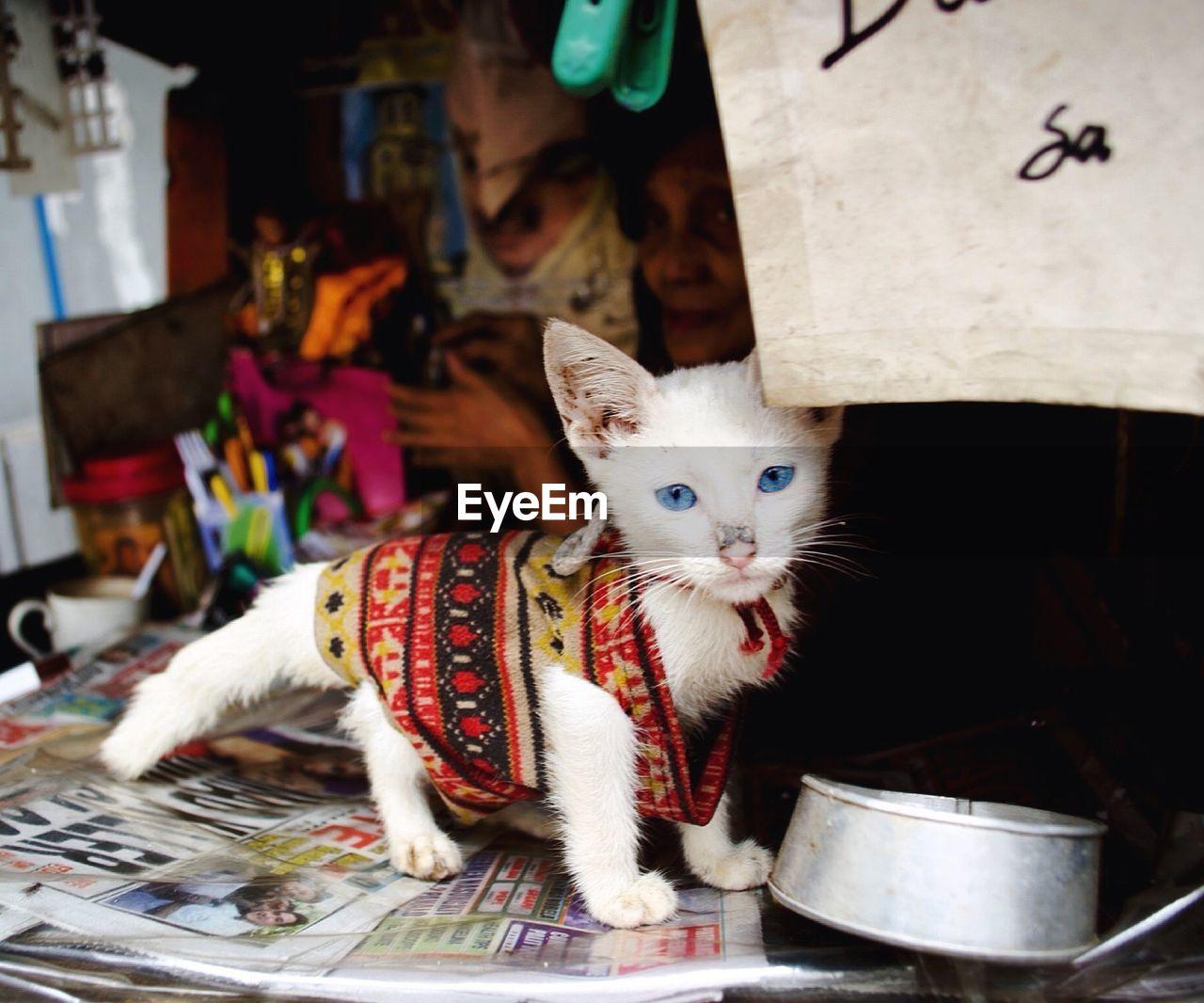 Portrait Of Kitten Standing On Table