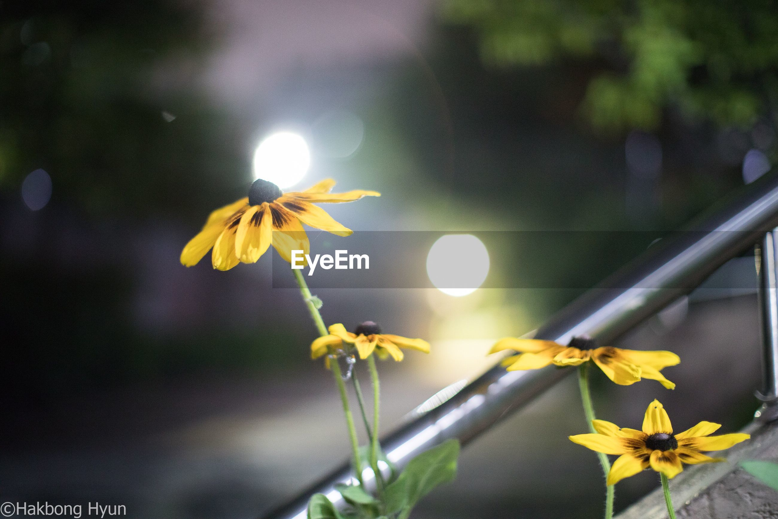 flower, growth, yellow, nature, petal, fragility, beauty in nature, plant, focus on foreground, freshness, no people, flower head, outdoors, day, close-up, sunlight, blooming