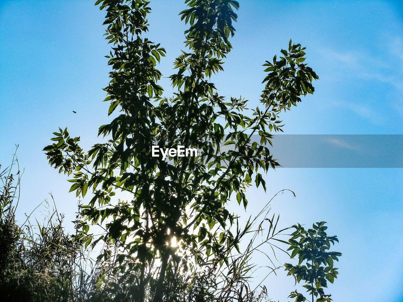 leaves, blue sky, freedom, growth, nature, adventure, sunshine, clear sky, tree, high, sky, no people
