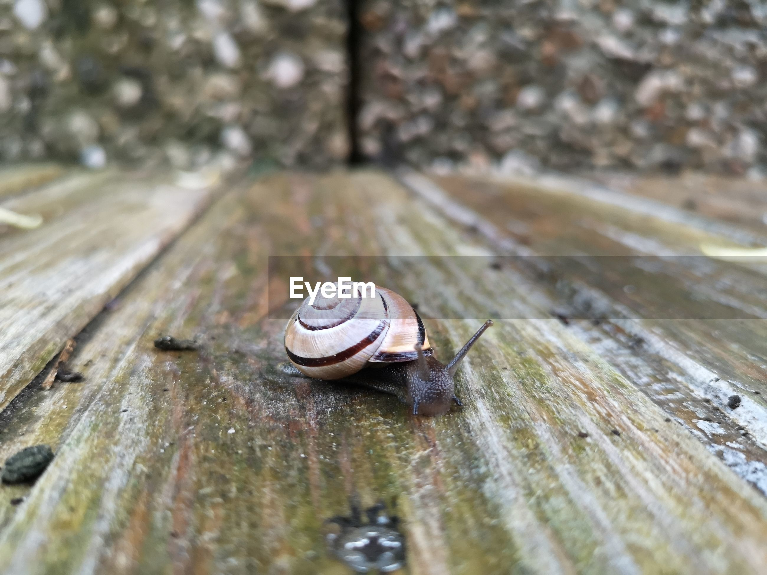 Close-up of snail on wood