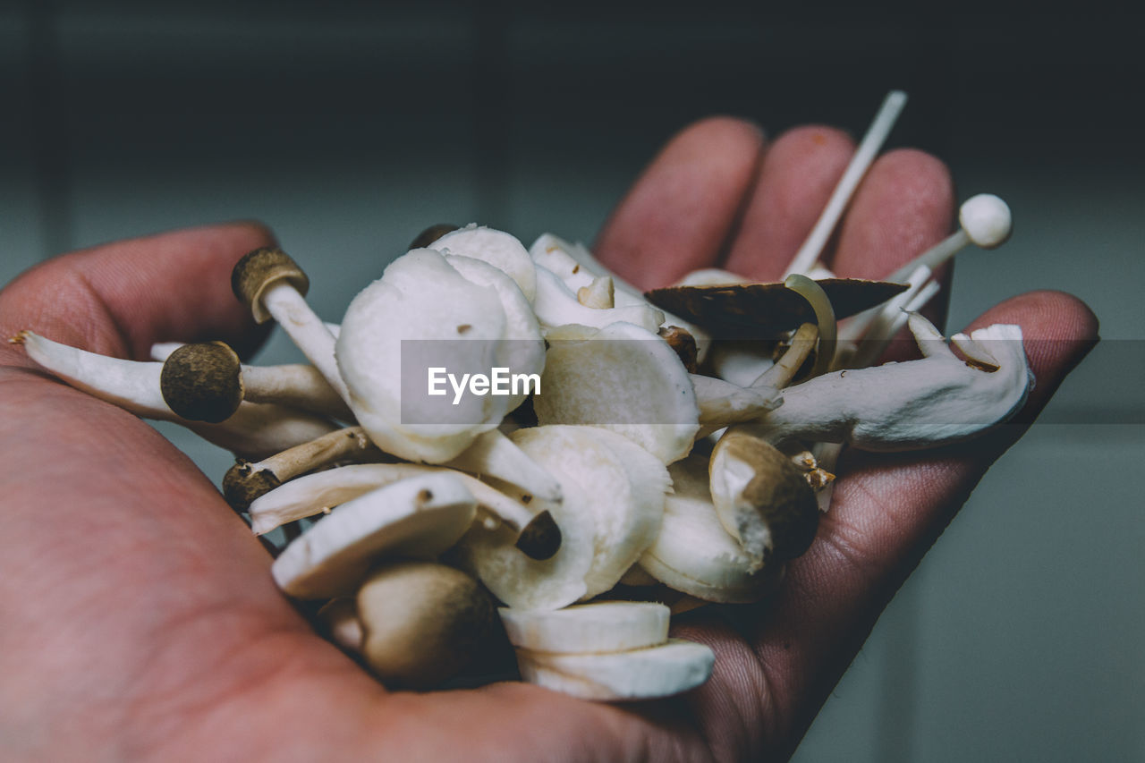 Cropped hand holding edible mushroom at home