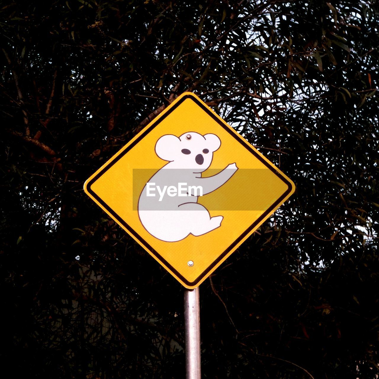 Close-up of koala bear sign against trees