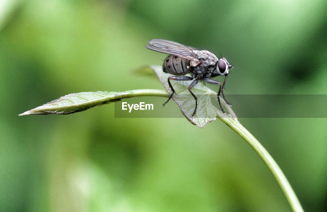 insect, animal themes, animals in the wild, nature, focus on foreground, plant, one animal, animal wildlife, no people, growth, close-up, leaf, green color, day, outdoors, beauty in nature, damselfly, fragility, freshness