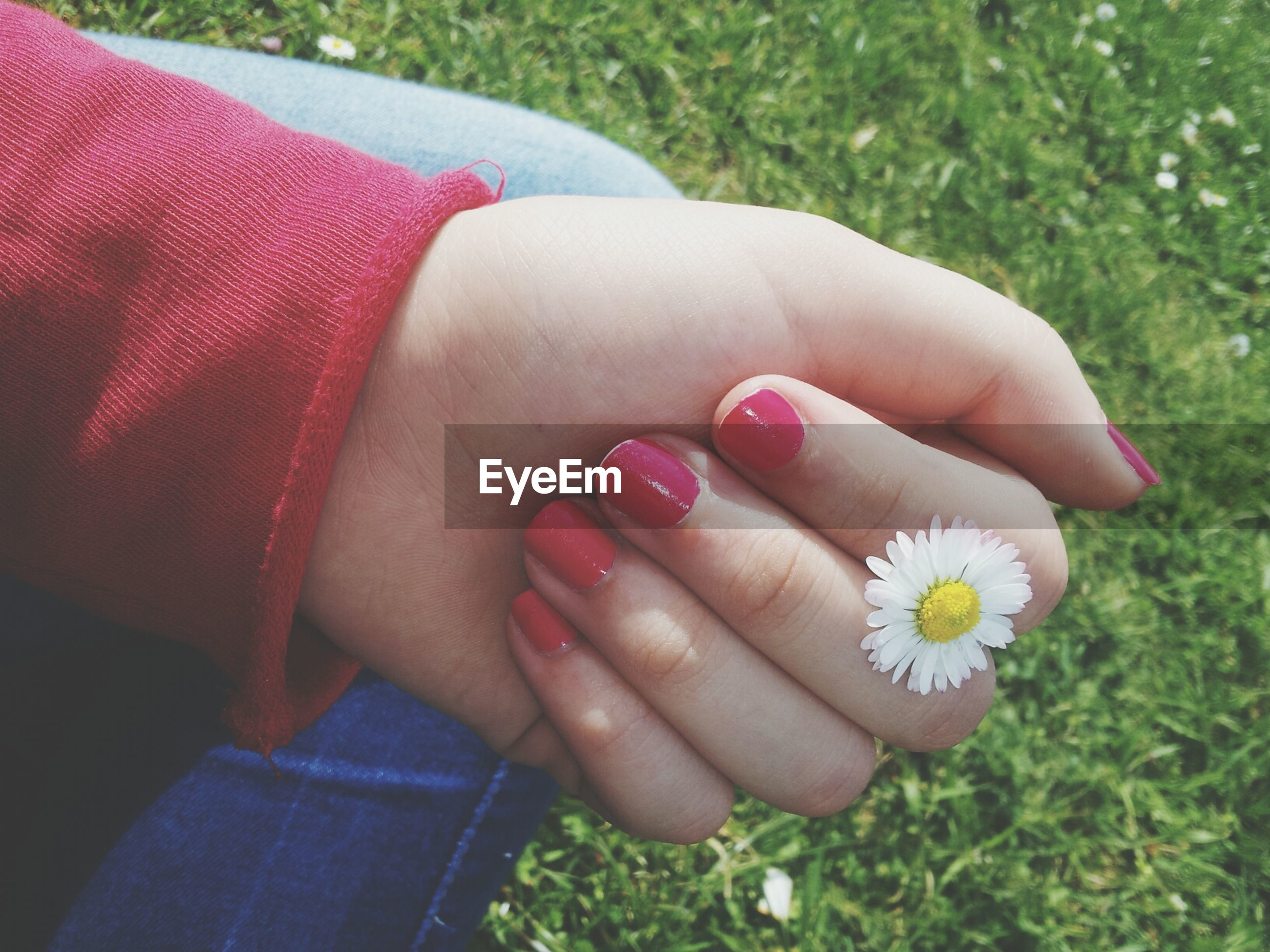 flower, person, part of, fragility, petal, freshness, holding, high angle view, lifestyles, flower head, personal perspective, low section, leisure activity, human finger, close-up