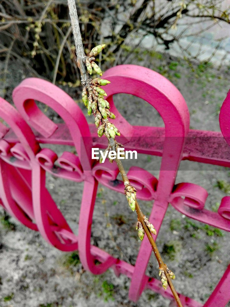 pink color, love, no people, outdoors, metal, day, close-up, red, growth, nature