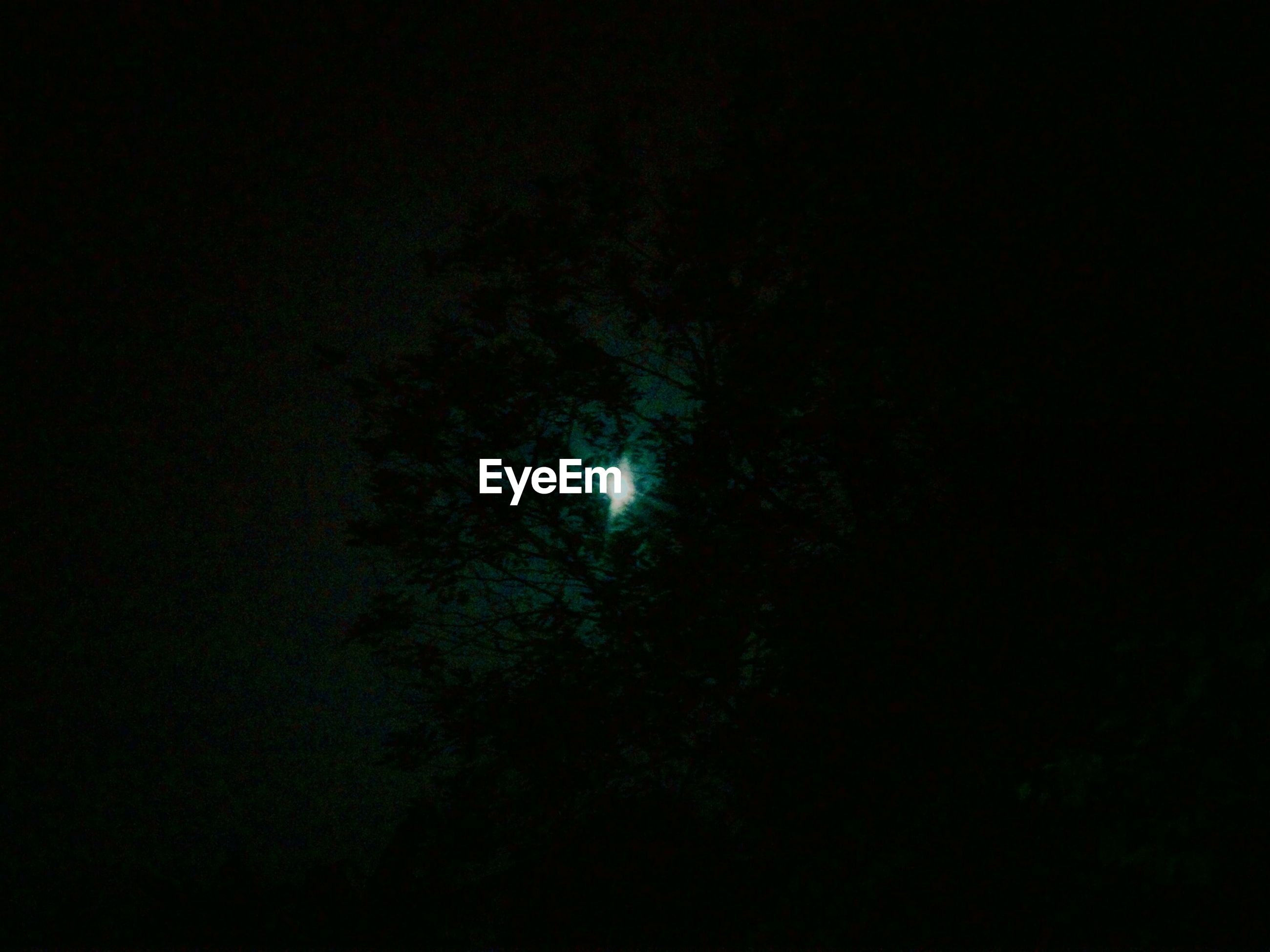 night, dark, copy space, low angle view, tranquility, beauty in nature, tranquil scene, astronomy, scenics, nature, backgrounds, moon, star - space, sky, idyllic, no people, space, mystery, outdoors, black background