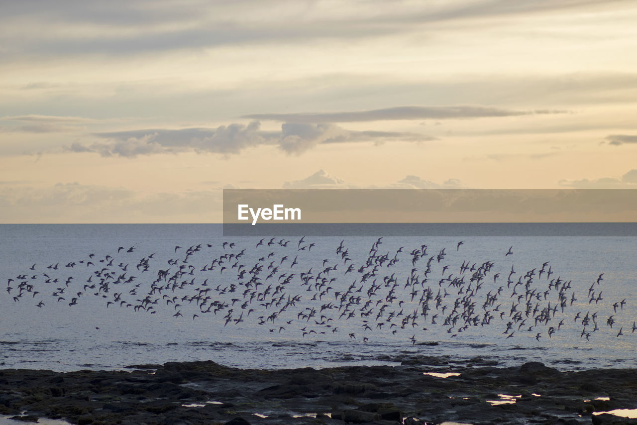 sky, sea, large group of animals, animals in the wild, group of animals, animal wildlife, animal themes, beauty in nature, horizon over water, scenics - nature, cloud - sky, animal, horizon, bird, vertebrate, water, sunset, nature, flock of birds, no people, outdoors