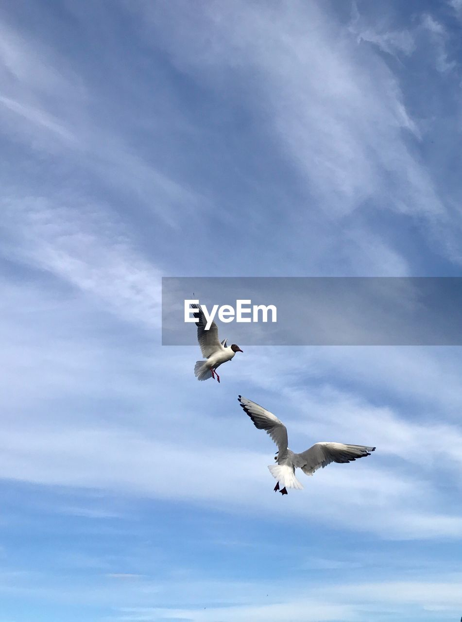 flying, cloud - sky, animal wildlife, vertebrate, animals in the wild, low angle view, sky, spread wings, animal themes, bird, animal, mid-air, seagull, day, no people, nature, motion, group of animals, outdoors