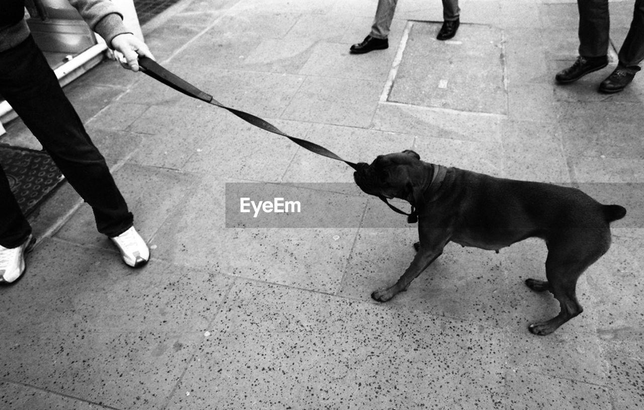 dog, pets, one animal, low section, domestic animals, pet owner, real people, pet leash, mammal, dog lead, human leg, human body part, walking, standing, outdoors, men, day, women, puppy, friendship, human hand, adult, people, adults only