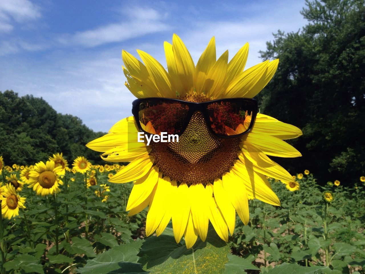 flower, yellow, petal, fragility, nature, growth, sunflower, beauty in nature, plant, flower head, freshness, blooming, day, outdoors, no people, pollen, sky, leaf, close-up, black-eyed susan