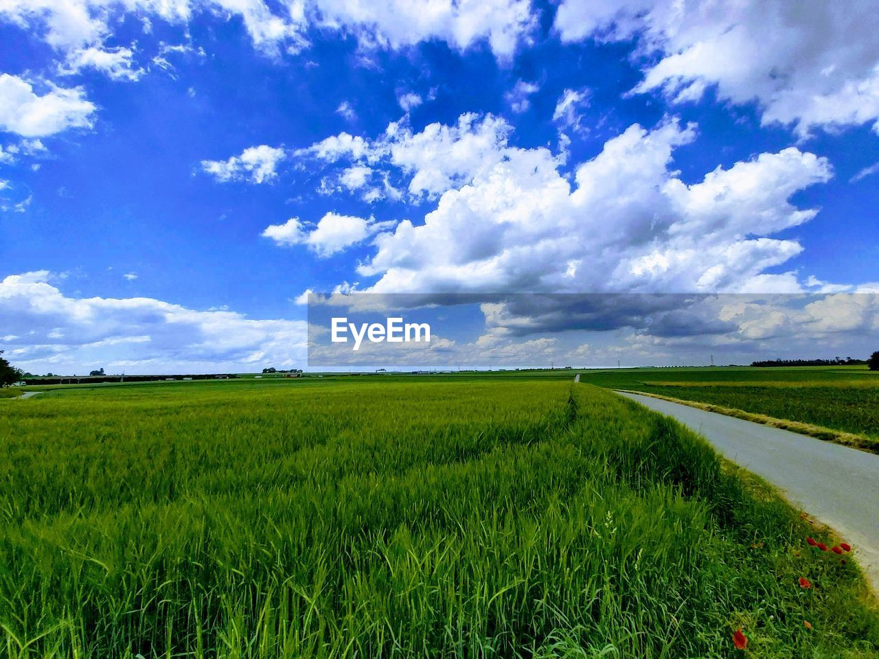 field, landscape, sky, cloud - sky, green color, environment, plant, tranquil scene, land, beauty in nature, tranquility, scenics - nature, growth, grass, agriculture, rural scene, no people, nature, day, road, outdoors
