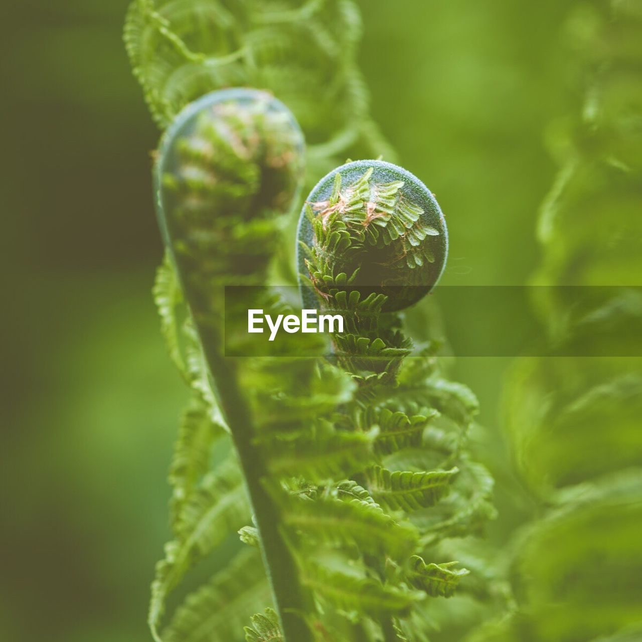 green color, nature, no people, close-up, spiral, growth, fragility, leaf, plant, outdoors, animal themes, day, beauty in nature