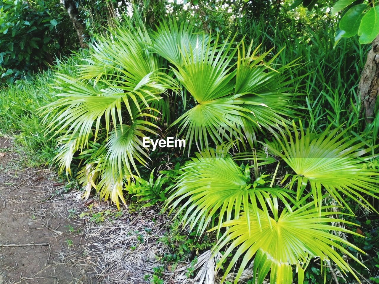 plant, growth, green color, beauty in nature, nature, no people, day, land, freshness, leaf, tranquility, tree, field, outdoors, high angle view, plant part, close-up, tropical climate, palm tree, botany
