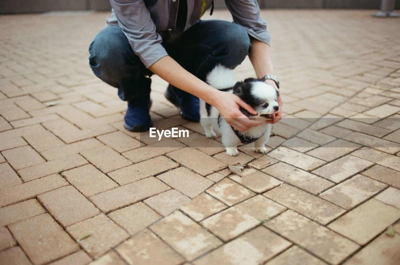 one animal, mammal, domestic animals, domestic, pets, dog, canine, vertebrate, real people, footpath, low section, people, men, day, young animal, puppy, city, outdoors, paving stone, pet owner