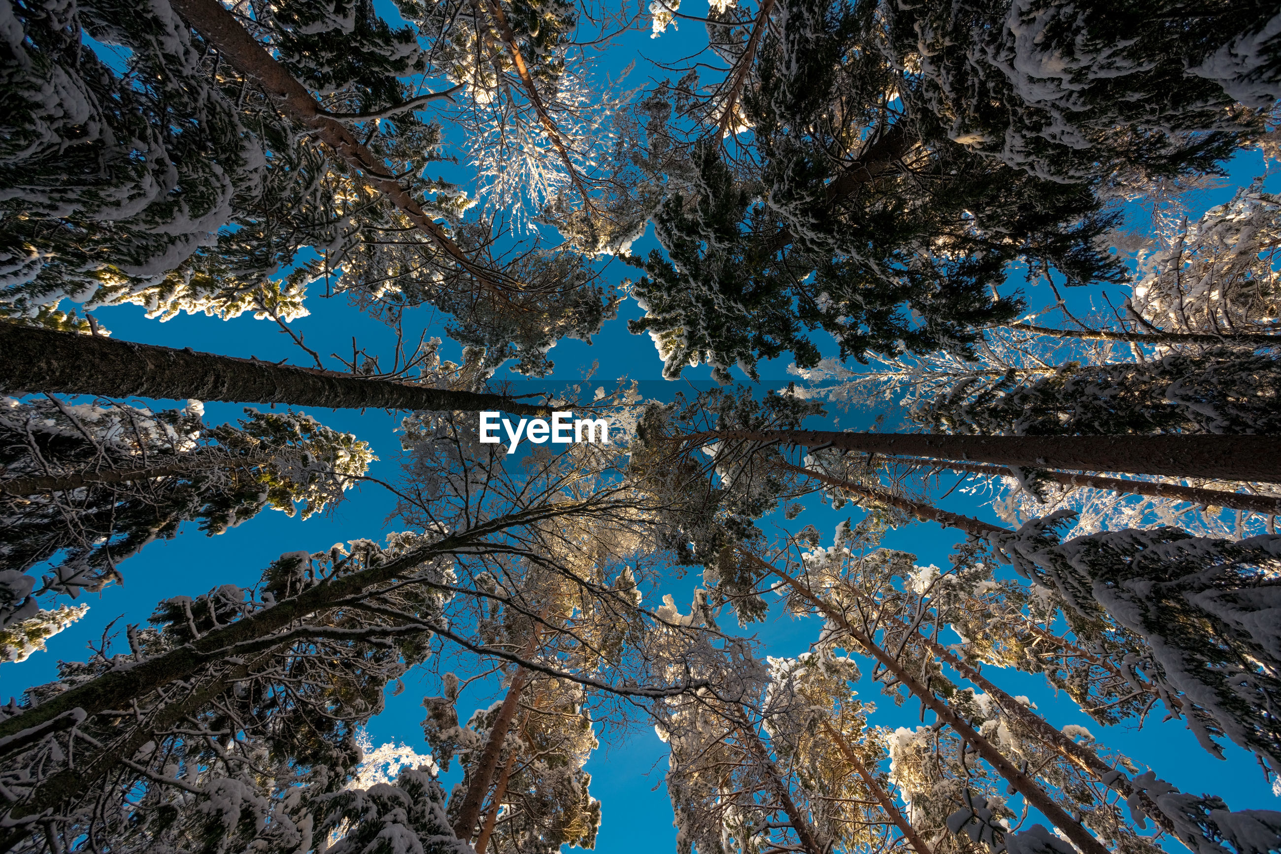 Low angle view of snow covered trees against blue sky
