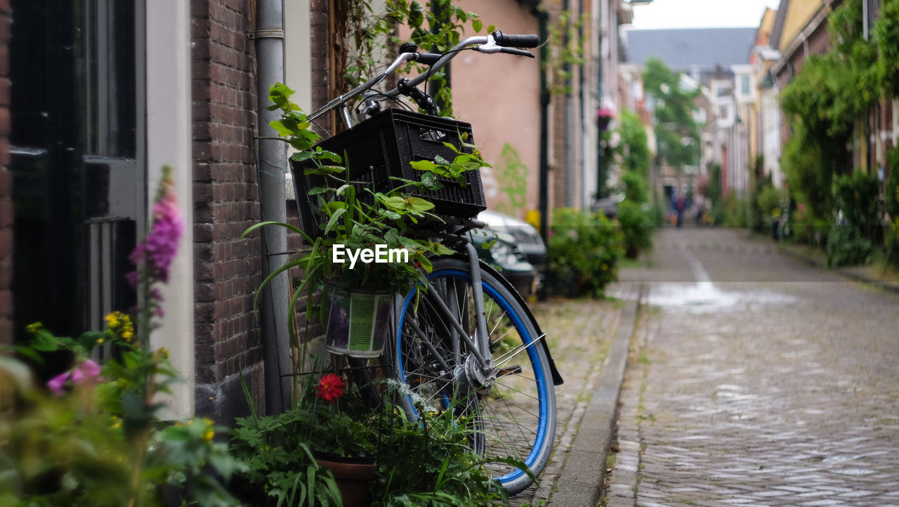 building exterior, architecture, plant, built structure, transportation, bicycle, nature, city, day, land vehicle, building, no people, outdoors, growth, mode of transportation, footpath, potted plant, leaf, selective focus, street, wheel, alley
