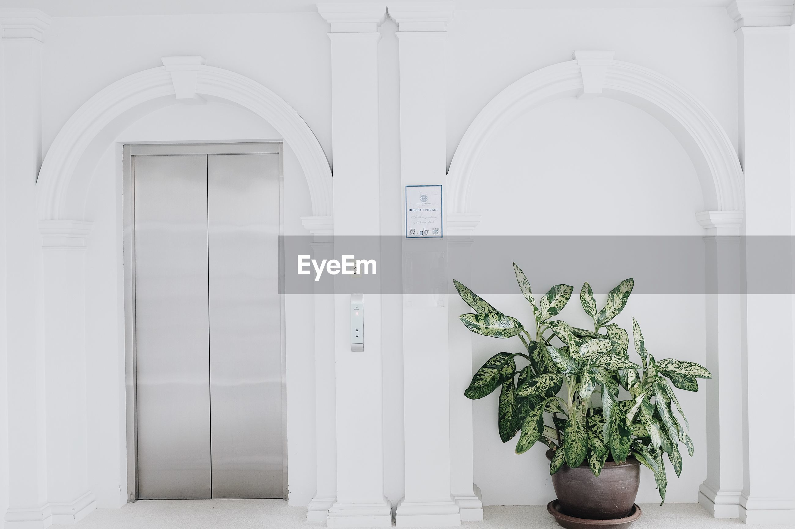 POTTED PLANTS AGAINST WHITE WALL AND BUILDING