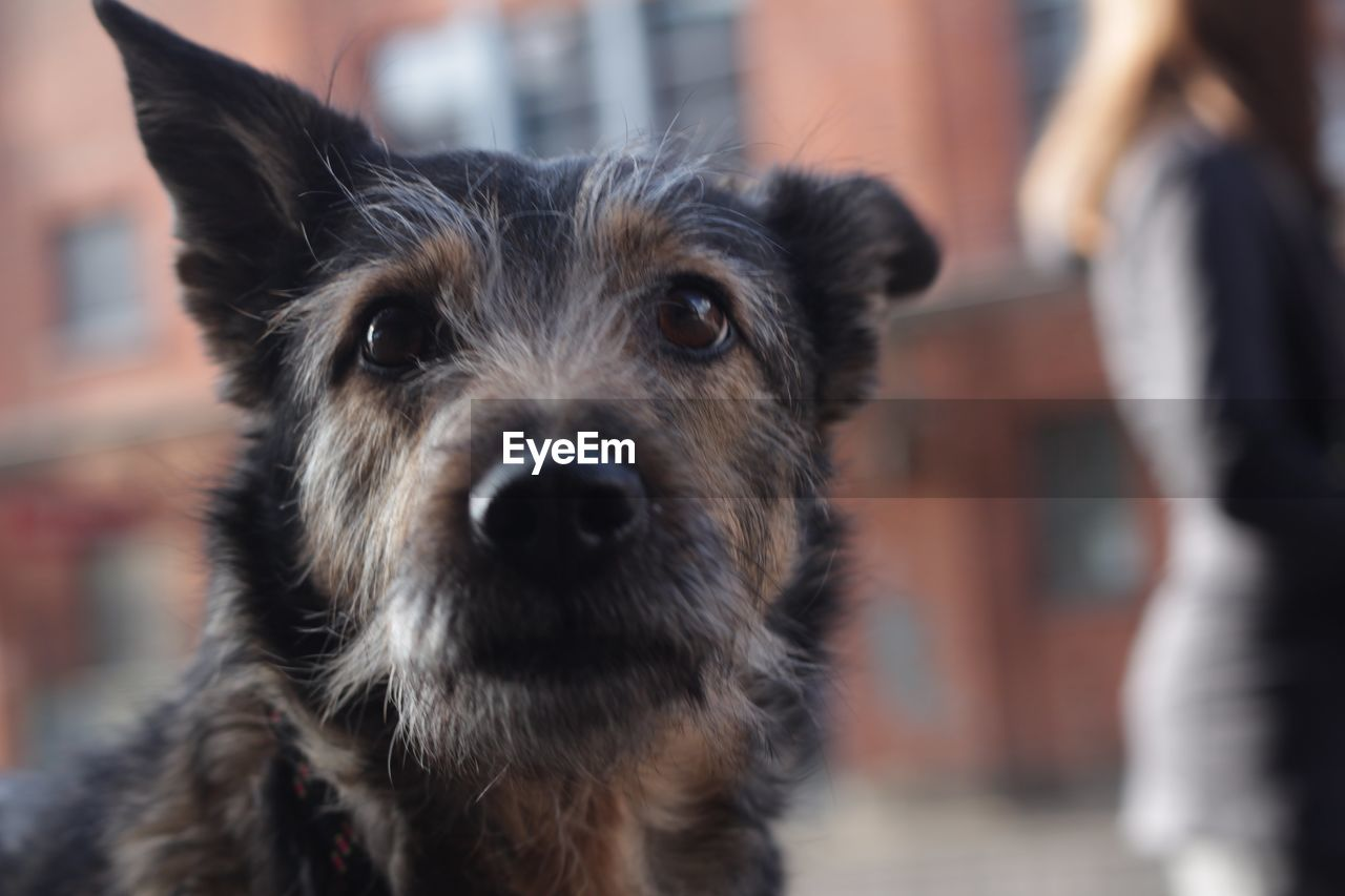 dog, canine, one animal, mammal, domestic, pets, domestic animals, vertebrate, portrait, focus on foreground, animal body part, looking at camera, close-up, incidental people, people, day, animal nose, snout
