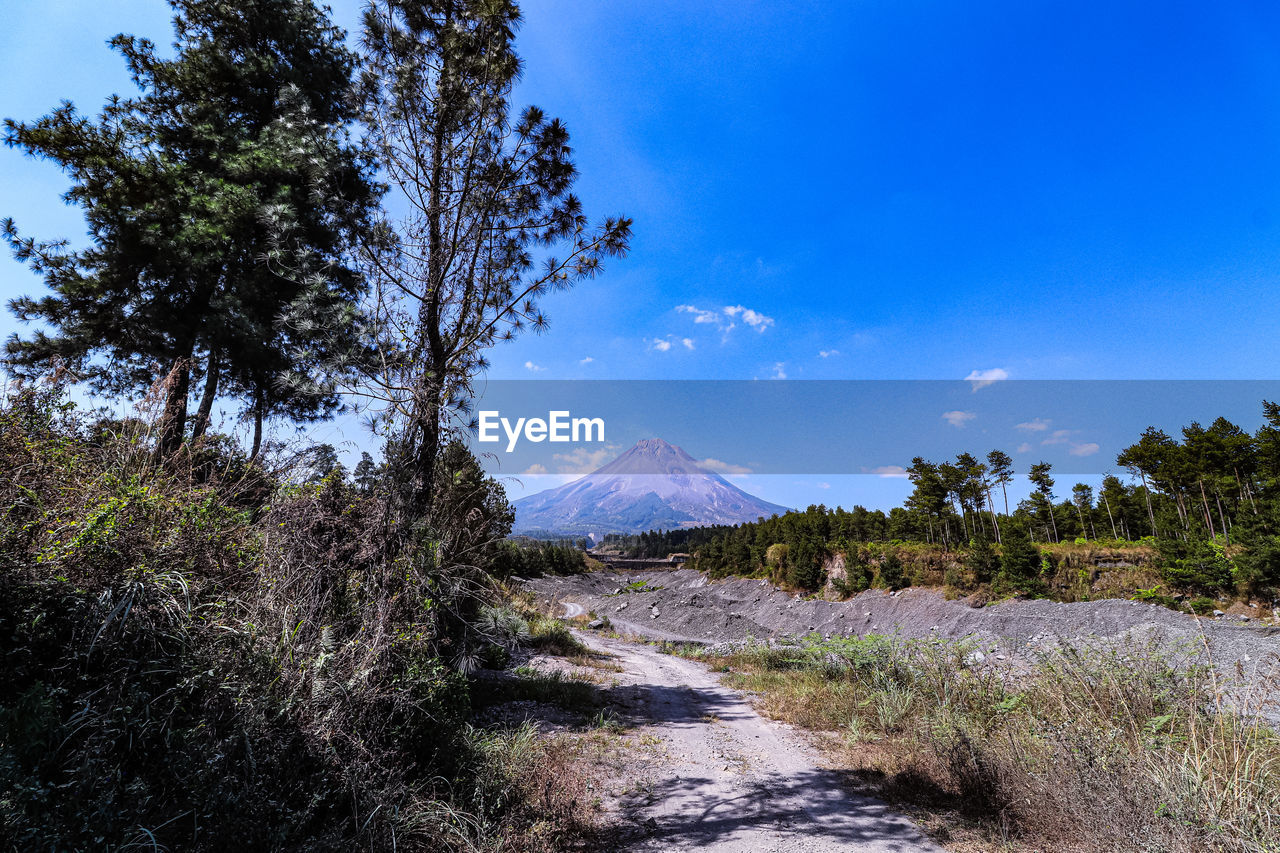 plant, tree, sky, direction, tranquil scene, beauty in nature, tranquility, landscape, environment, nature, scenics - nature, the way forward, mountain, blue, non-urban scene, growth, day, land, road, no people, outdoors, diminishing perspective