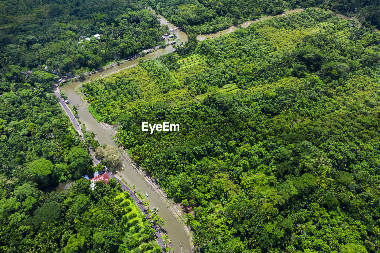 tree, plant, high angle view, growth, green color, road, environment, scenics - nature, nature, transportation, landscape, beauty in nature, aerial view, land, day, forest, lush foliage, foliage, no people, tranquil scene, outdoors