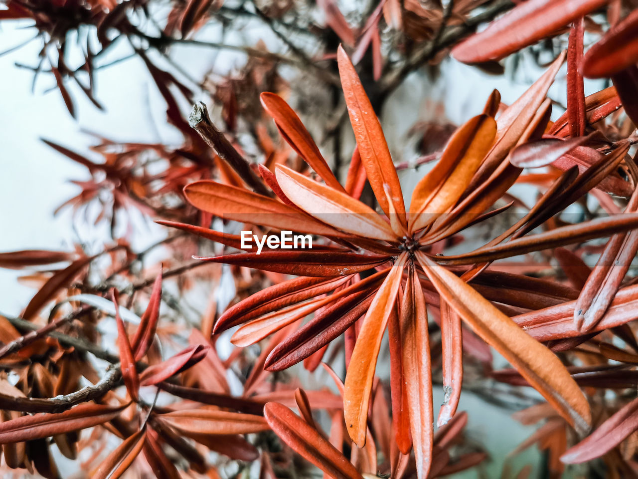 plant, focus on foreground, close-up, no people, beauty in nature, growth, selective focus, nature, day, freshness, vulnerability, orange color, fragility, tranquility, brown, dry, outdoors, flower, flowering plant, tree, flower head, leaves
