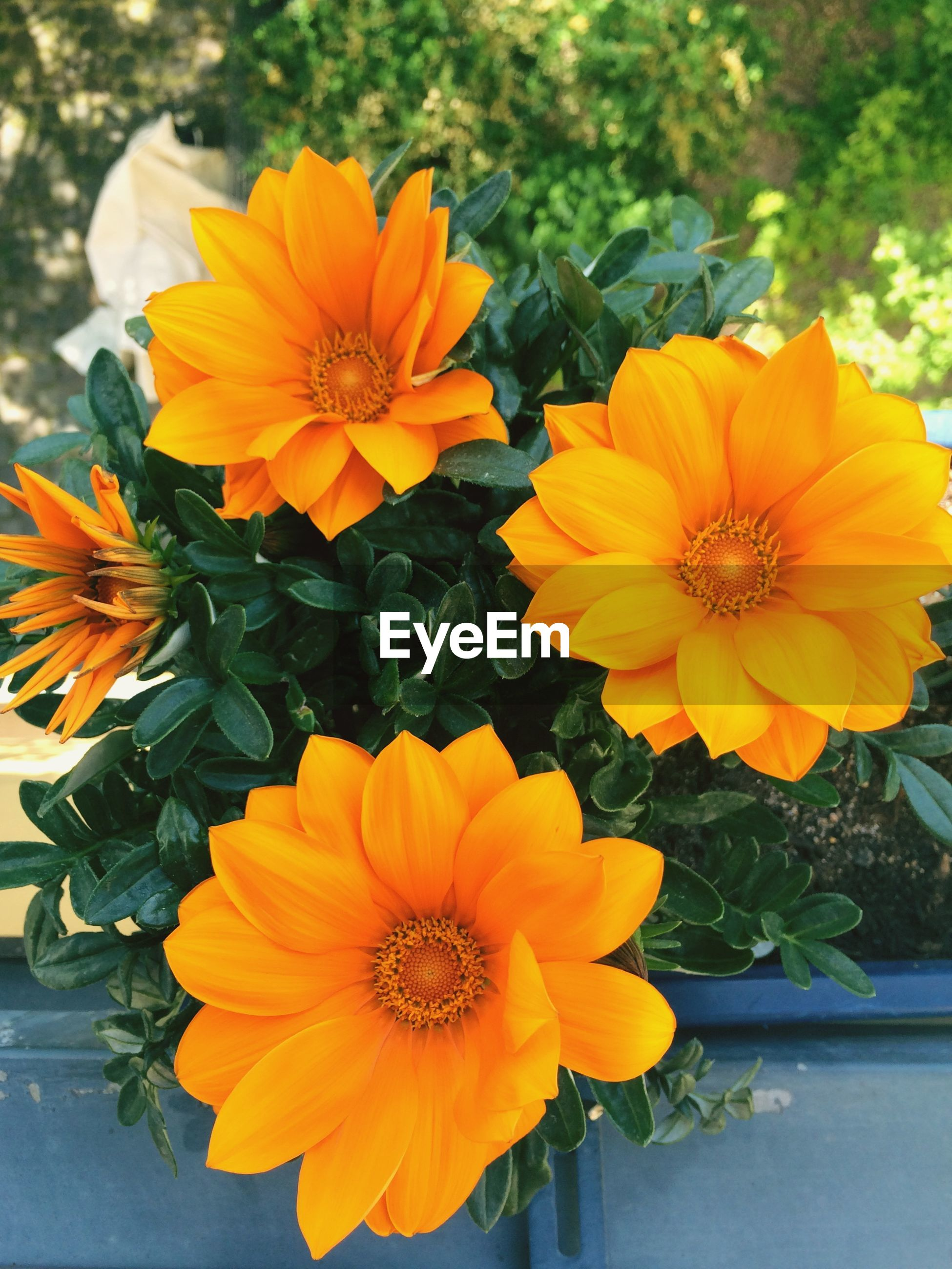 Orange flowers in backyard