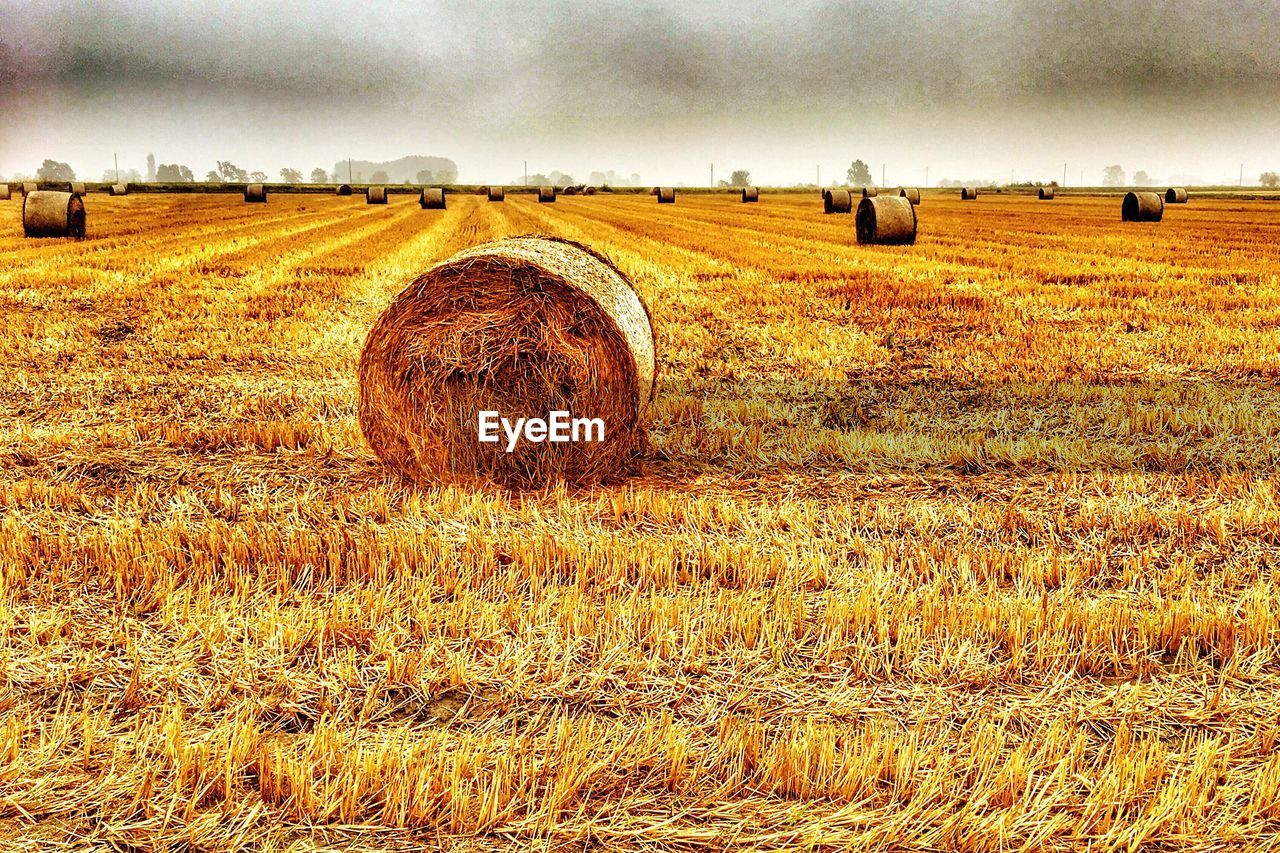 bale, field, hay bale, hay, agriculture, harvesting, rural scene, farm, landscape, tranquility, tranquil scene, day, solitude, outdoors, no people, nature, grass, scenics, sky, beauty in nature