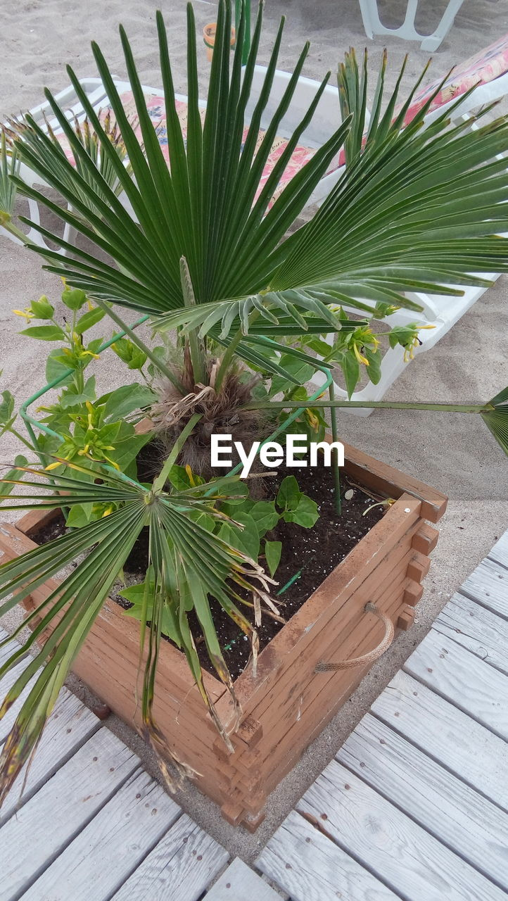 growth, plant, potted plant, green color, leaf, nature, high angle view, no people, wood - material, table, day, close-up, indoors, beauty in nature, freshness
