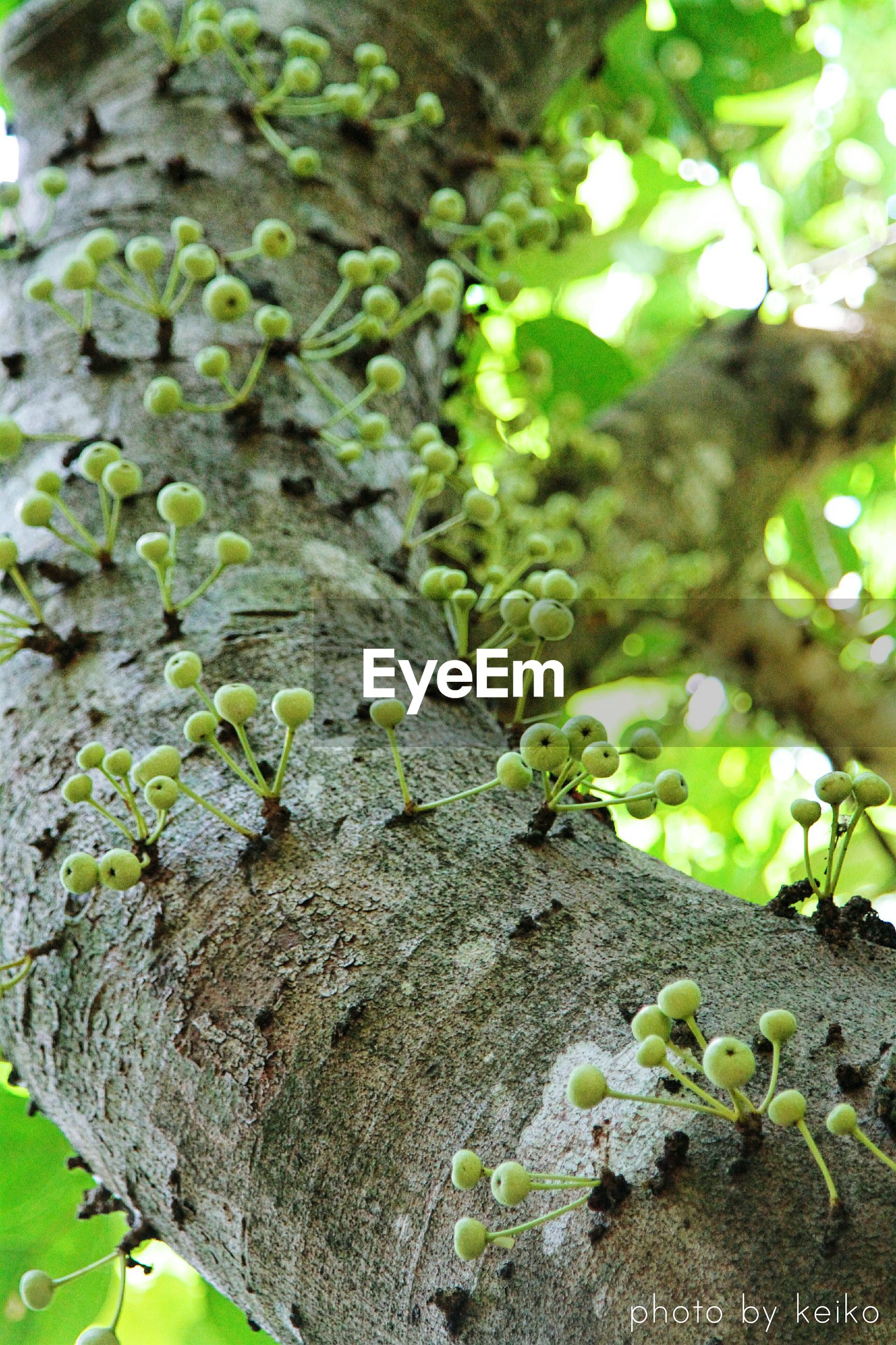 growth, leaf, green color, plant, nature, tree, moss, growing, beauty in nature, tranquility, rock - object, outdoors, day, close-up, green, no people, branch, tree trunk, ivy, low angle view
