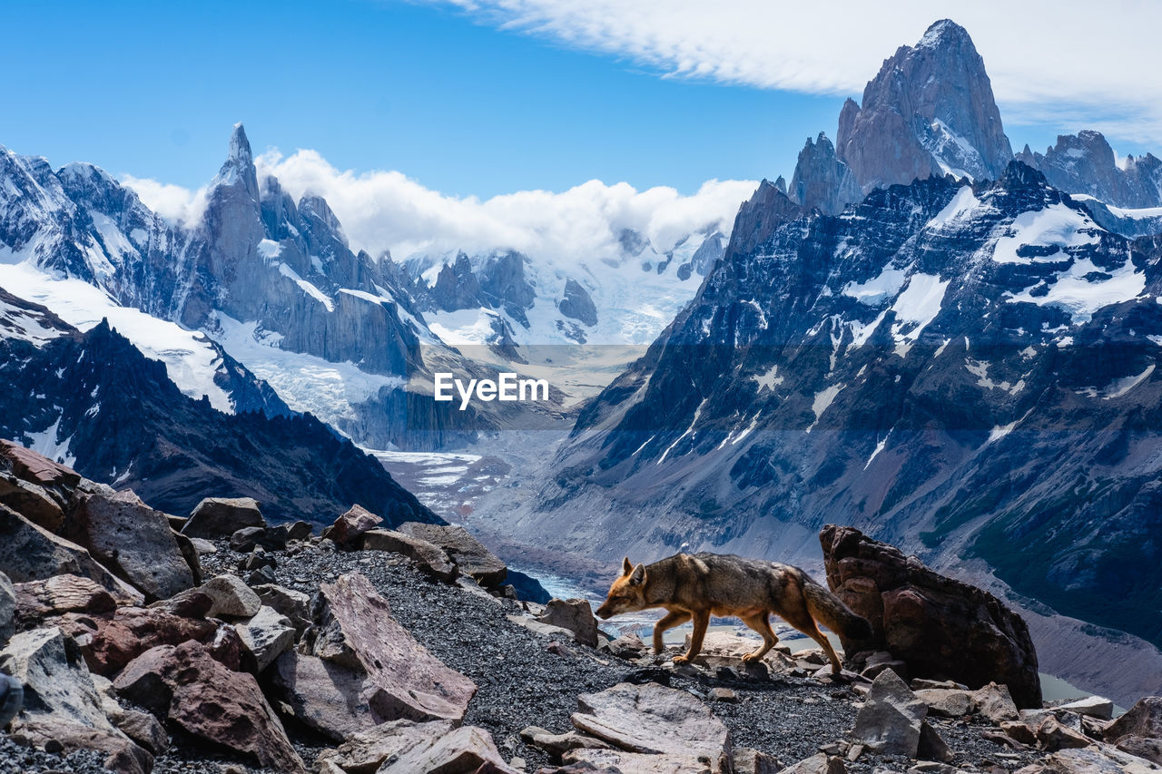 mountain, snow, mountain range, mammal, cold temperature, winter, beauty in nature, sky, animal themes, animal, scenics - nature, nature, rock, snowcapped mountain, domestic animals, rock - object, environment, domestic, no people, outdoors, mountain peak, formation
