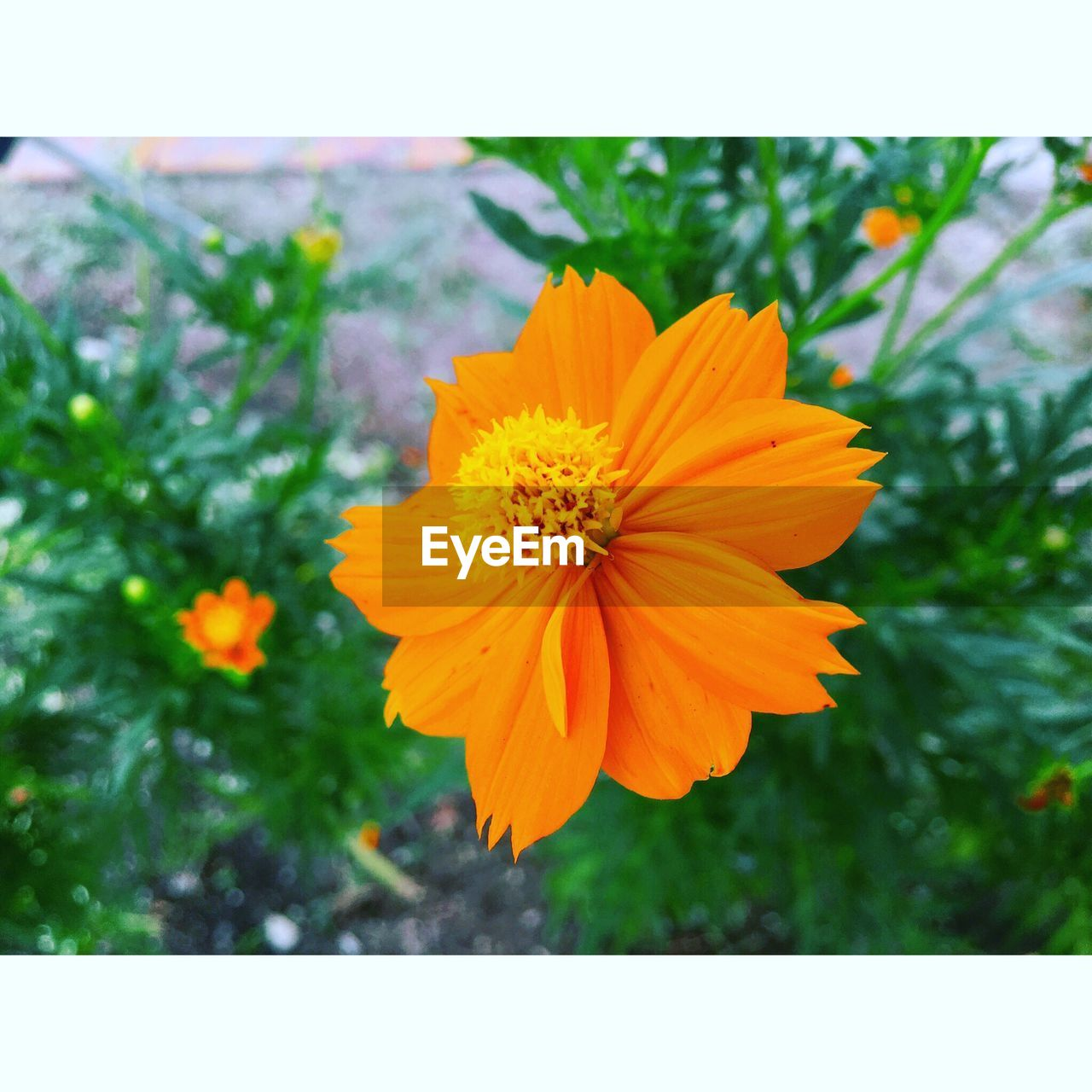 flower, nature, growth, petal, fragility, plant, beauty in nature, freshness, close-up, flower head, focus on foreground, no people, outdoors, day, yellow, blooming