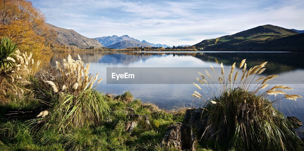 Plants Grown On The Shore Of Hayes Lake In New Zealand